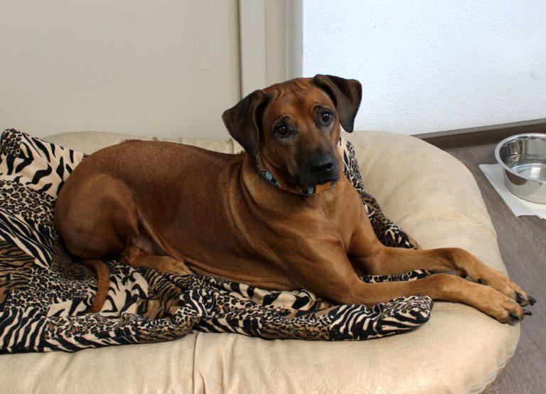 Bürohund Amira der Steuerkanzlei